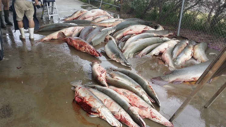 Falcon Lake Tackle - Fishing Tackle, Marine Supplies, and the